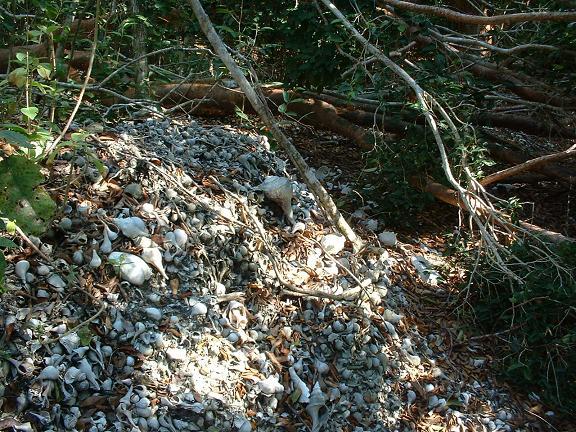 calusa mound on Josslyn