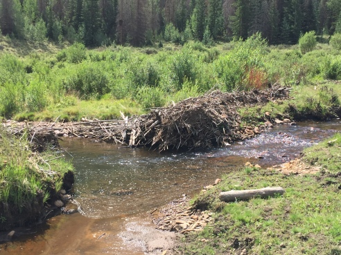Blown Out Beaver Dam Honey Hole